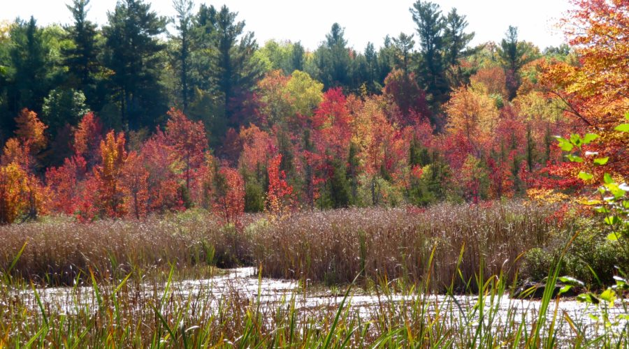 colourful marshland