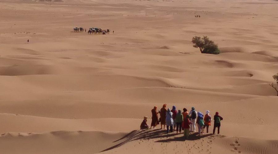17-Gruppe auf Düne - 3