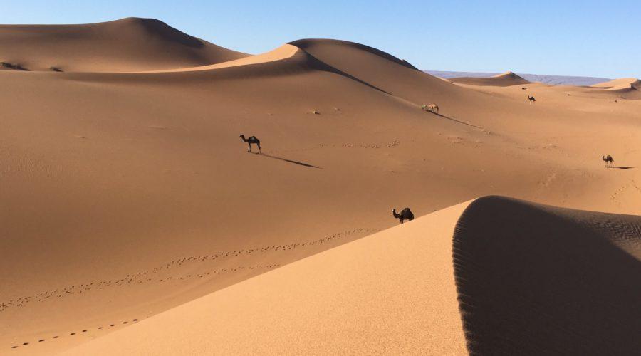 5-Dünen & Kamele