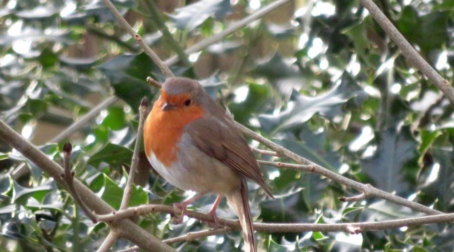 Freund Robin
